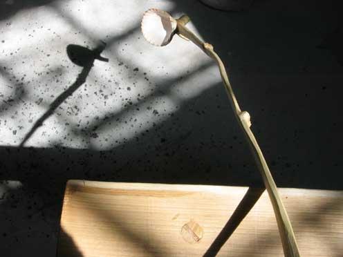 Hinchee Hung cutlery-Shell spoon