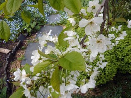 Garden-2014-April2