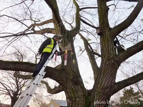 Lookout-artist-in-tree